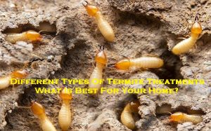 Different Types Of Termite Treatments – What Is Best For Your Home?