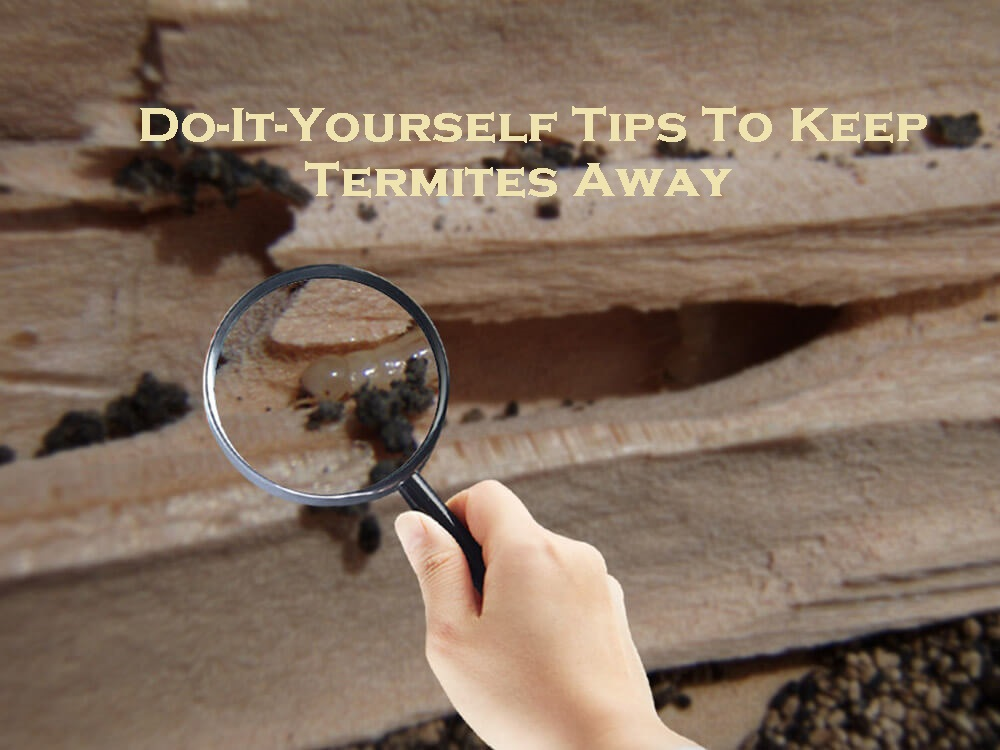 Do-It-Yourself Tips To Keep Termites Away